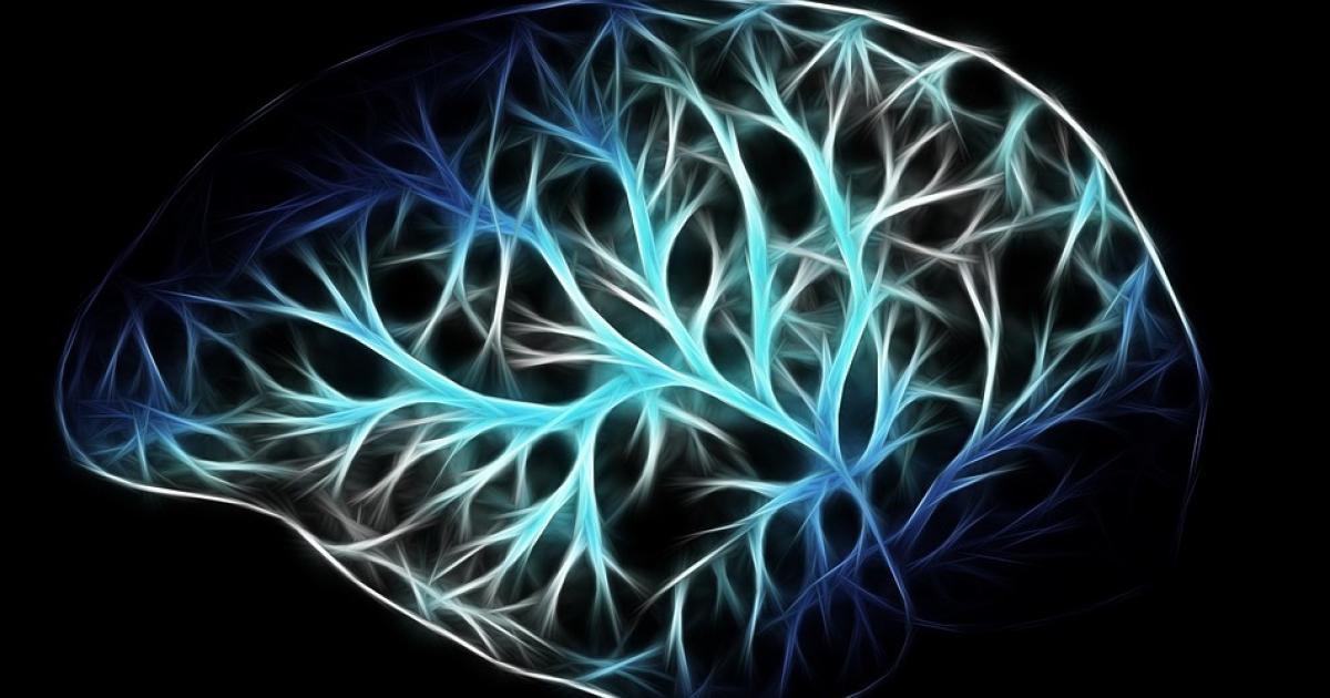 neuroimaging claim study